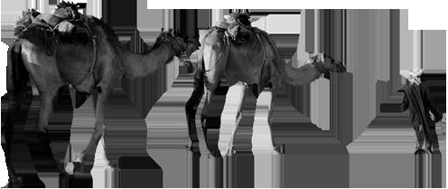 Desert Camel PNG-PlusPNG.com-496 - Desert Camel PNG