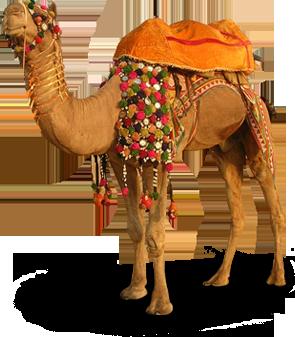 Camel Transparent PNG Image - Desert Camel PNG