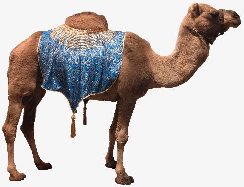 Desert Camel, Desert, Dromedary, Animal PNG Image and Clipart - Desert Camel PNG