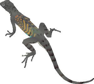 Desert Lizard PNG - 45590