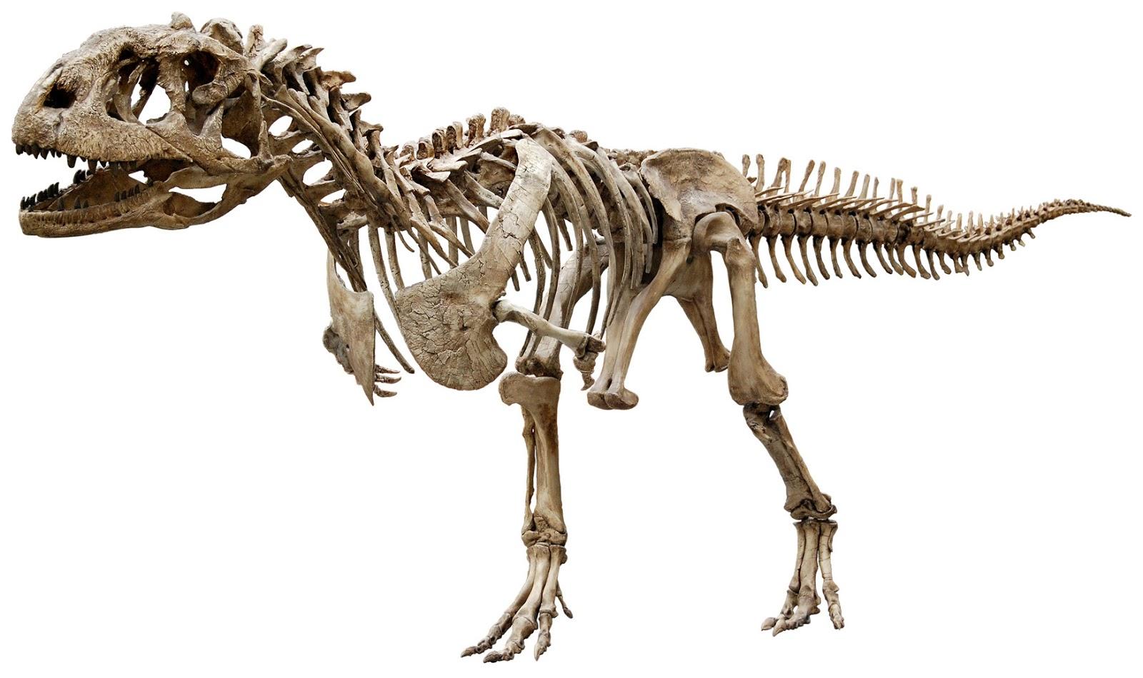HD Dinosaur Fossils, Dinosaur