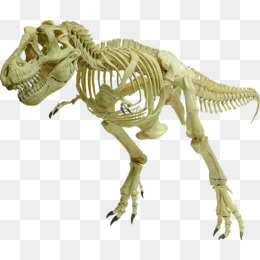 Dinosaur Bones PNG HD - 123606