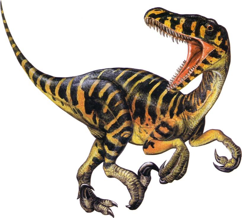 Dinosaur Fossil Drawing