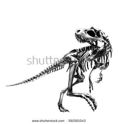 dinosaur skeleton Tyrannosaurus, bone, black and white drawing, drawings,  sketch, vector - Dinosaur Bones PNG HD