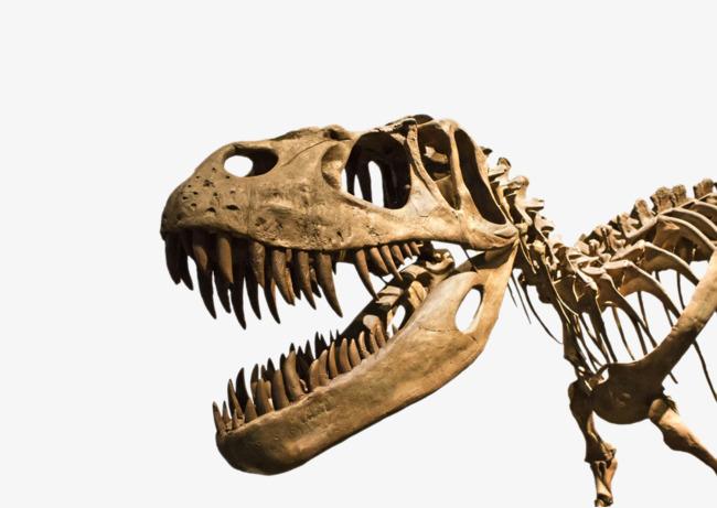 HD Dinosaur Fossils, Dinosaur, Dinosaur Fossil, Fossil Free PNG Image - Dinosaur Bones PNG HD