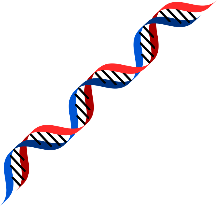 Dna PNG HD - 139602