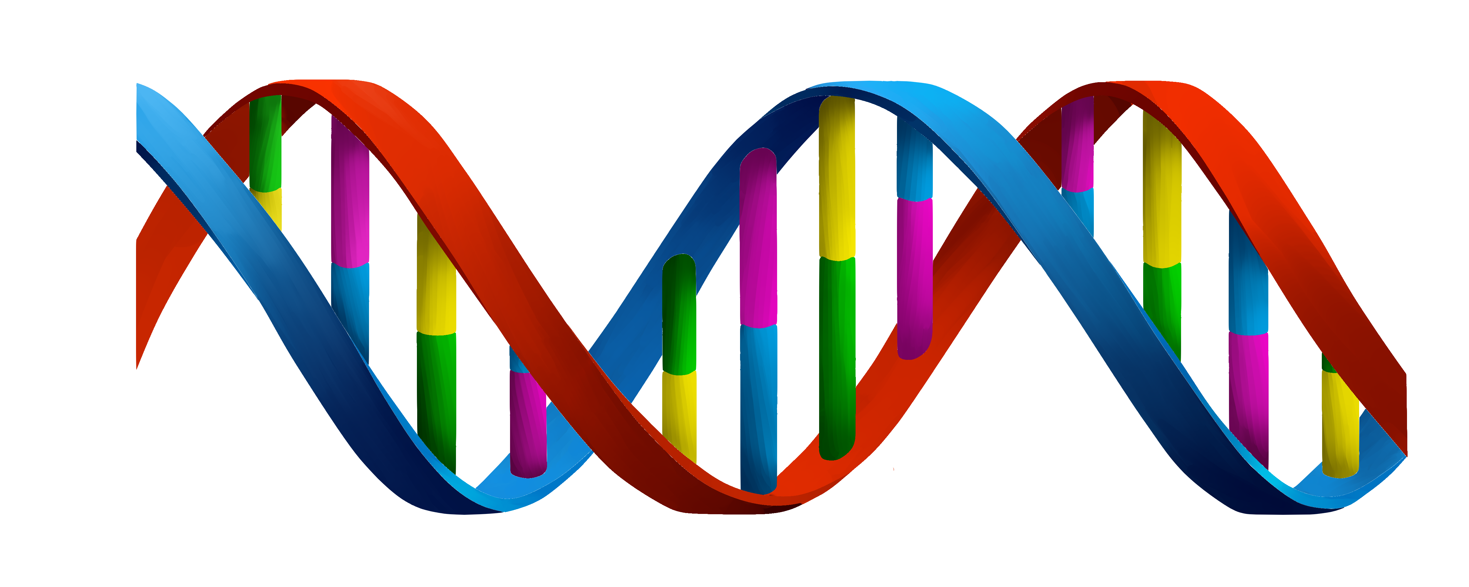 Dna PNG HD - 139596