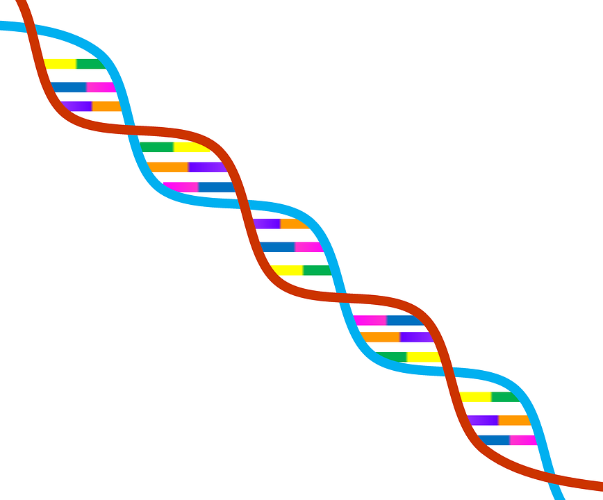 Dna, Genetics, Symbol, Biology, Research, Science - PNG Genetics - Dna PNG HD