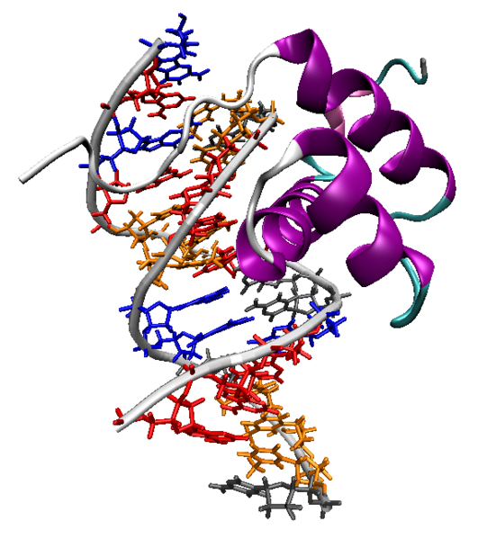 Dosya:Homeodomain-dna-1ahd.png - Dna PNG HD
