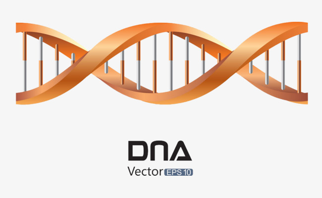 Orange DNA material buckle Free HD, Orange Dna, Gene, Dna PNG Image and - Dna PNG HD