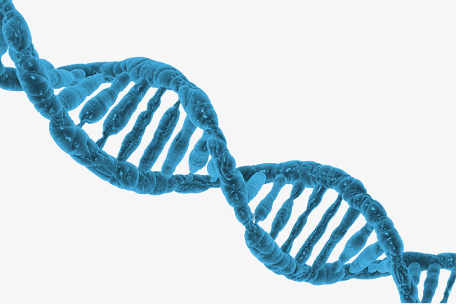 Dna PNG HD - 139590
