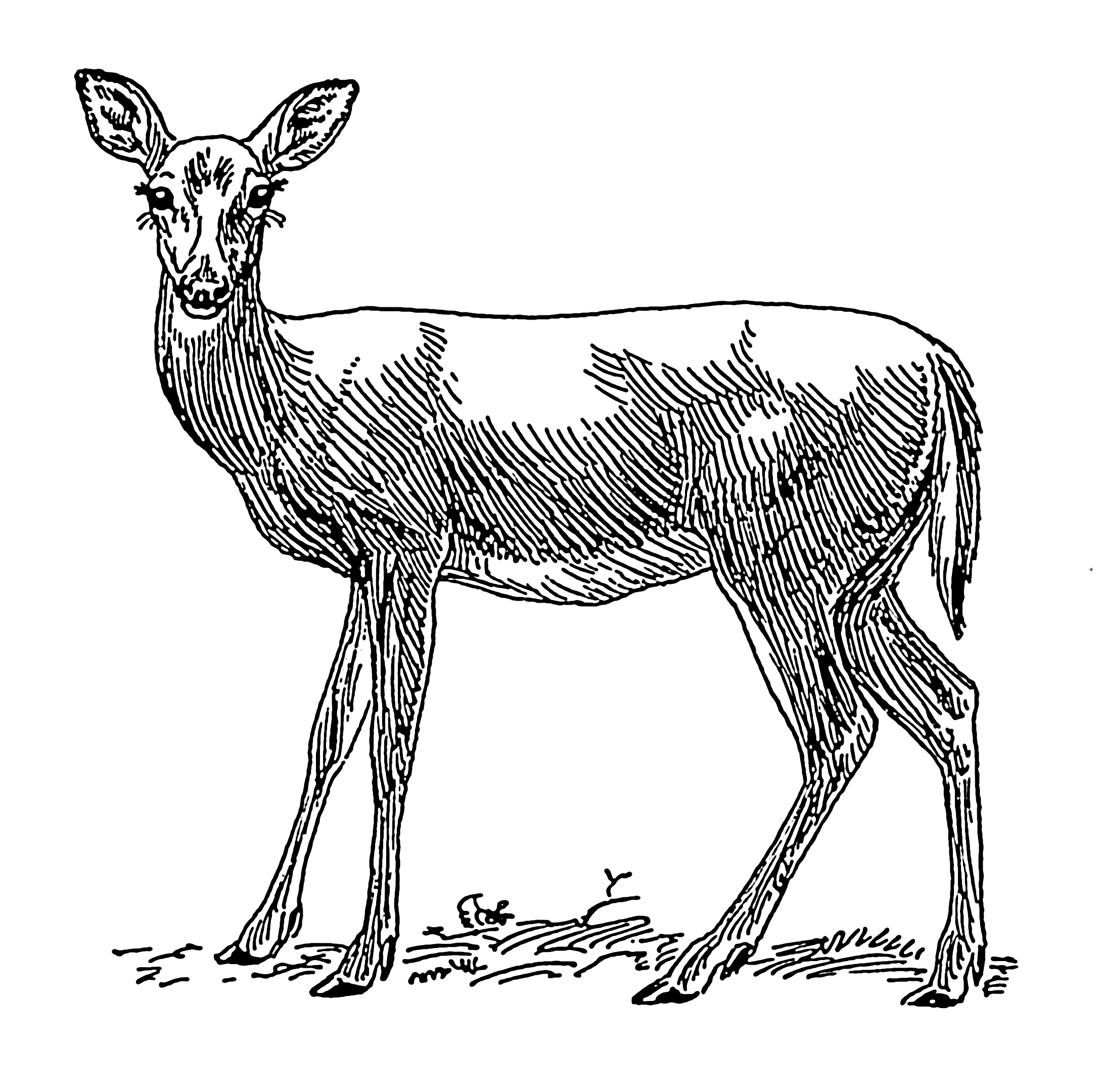 Doe PNG Black And White