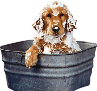 Dog Bath PNG