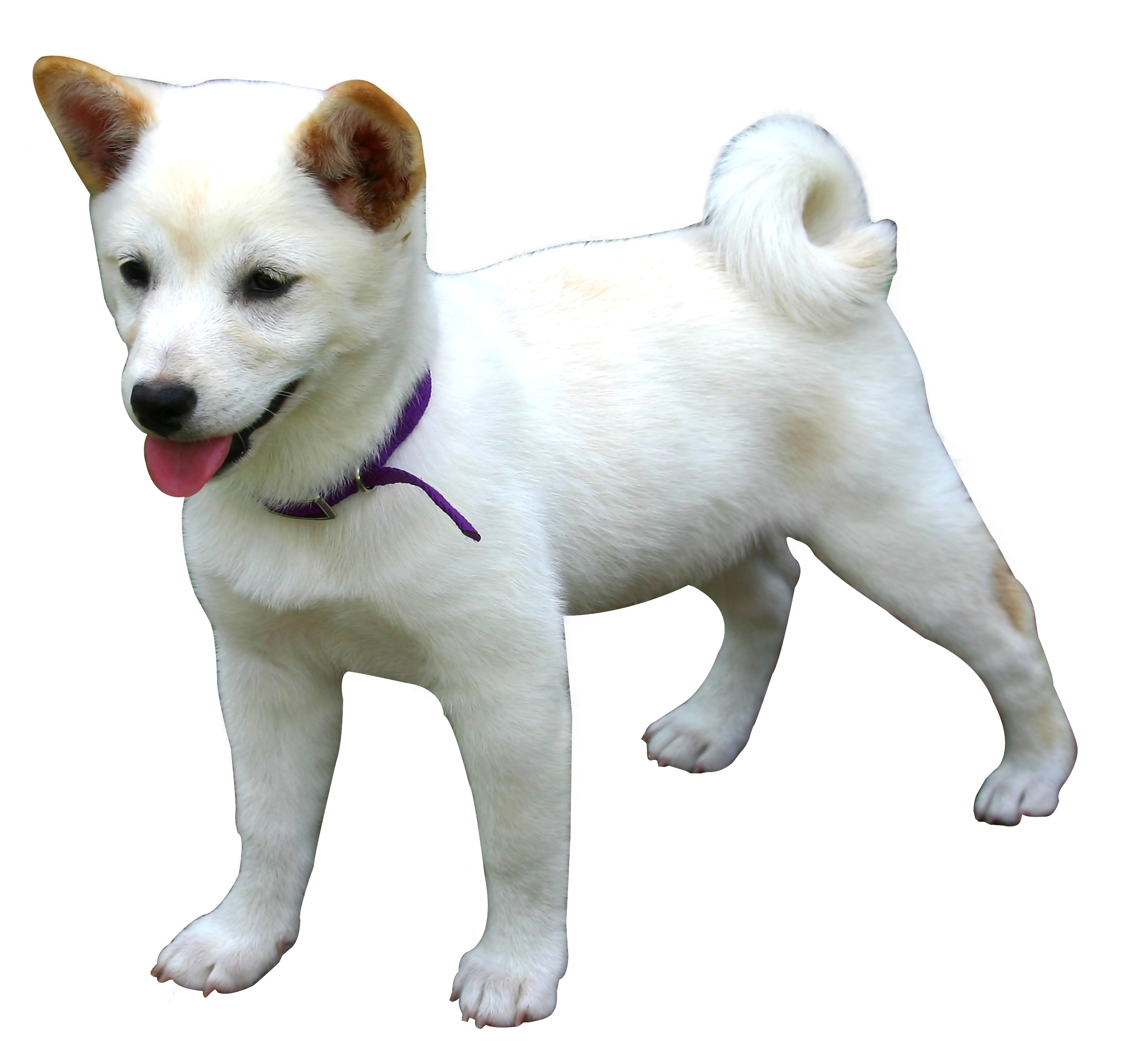 Dog HD PNG-PlusPNG.com-2652 - Dog HD PNG