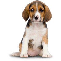 Dog Png Image Picture Download Dogs PNG Image - Dog HD PNG