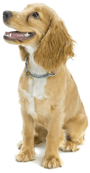 Dog Png Image PNG Image - Dog HD PNG