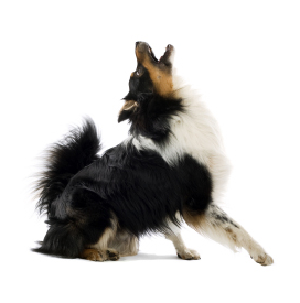 Dog Howling PNG - 47190