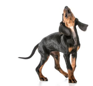Dog Howling PNG - 47183