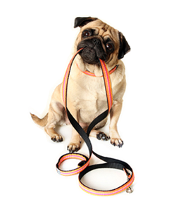 Dog Leash PNG HD - 140130