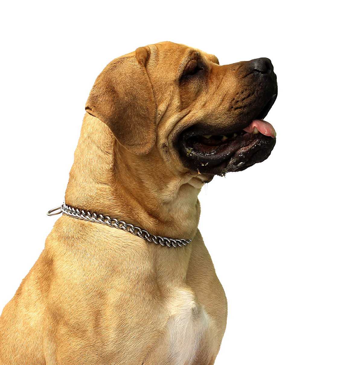 PlusPNG - Dog PNG