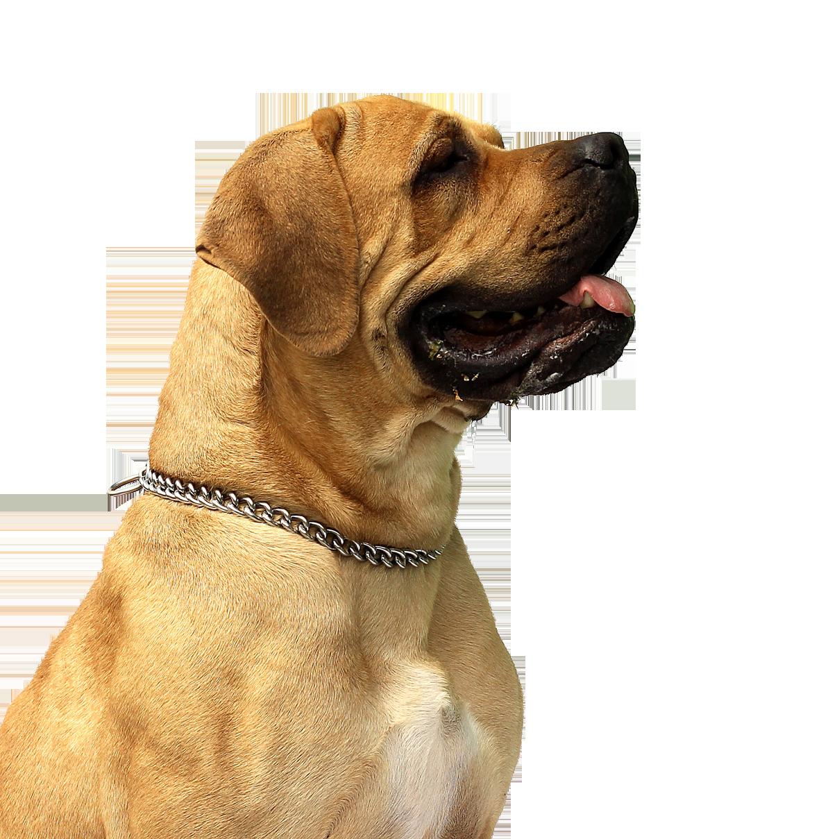Dog PNG - 21976