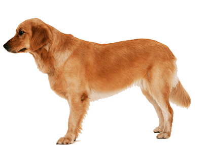 Dog PNG - 8885