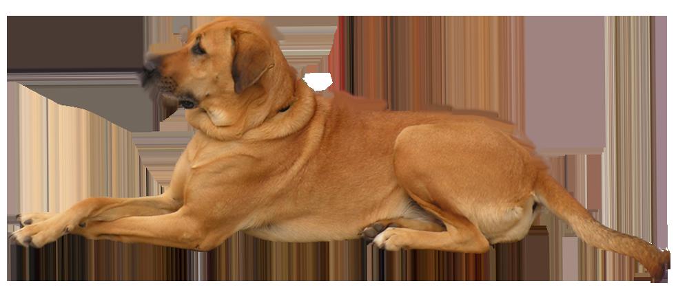 Dog PNG - 21975