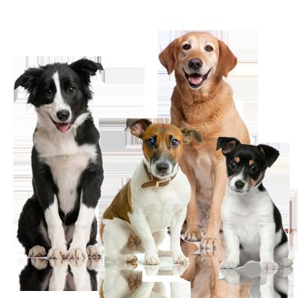 Dog PNG - 8879