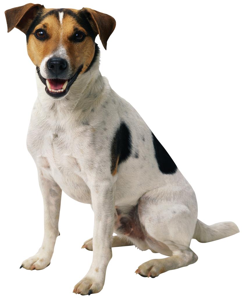 Dog PNG - 21967