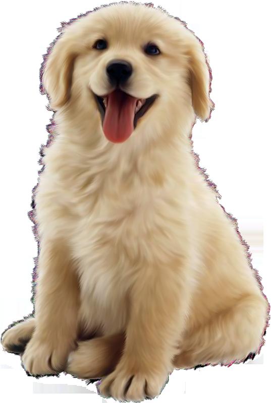 Dog PNG - 8876