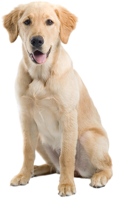 Dog PNG - 21980