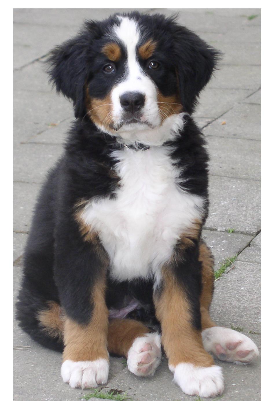 Dog PNG - 21968