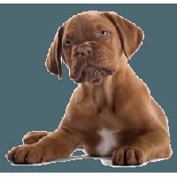 Dog PNG - 21973