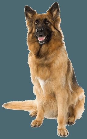Dog PNG - 21978