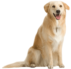 Dog Png Image Picture Download Dogs PNG Image - Dog PNG