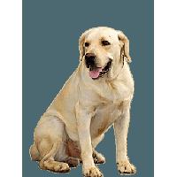 Dog PNG - 21965