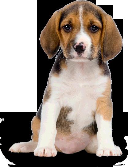 Dog PNG - 8882