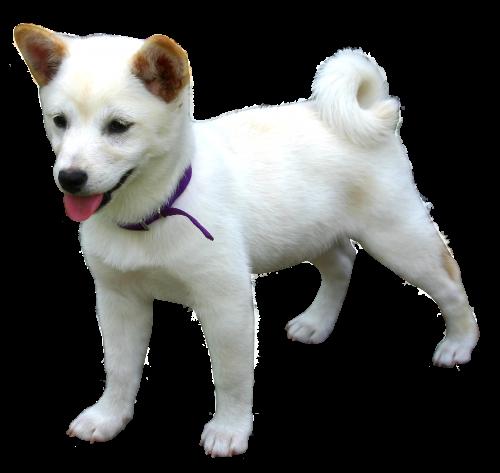Dog PNG - 21974