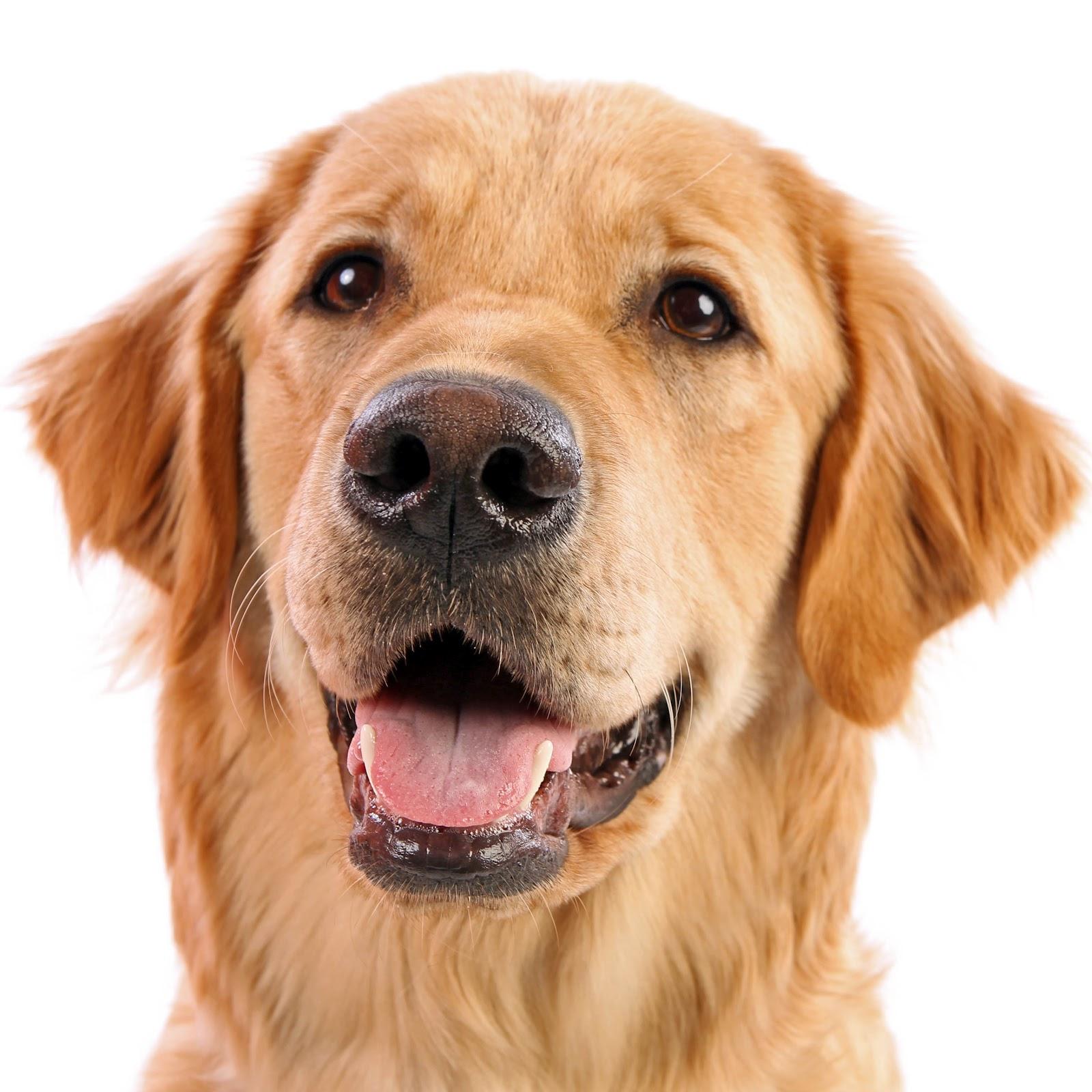 Dog PNG Jpg - 49592