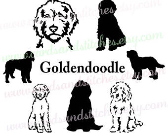 Goldendoodle SVG - Dog Silhouettes - Dogs SVG - Digital Cutting File -  Vector Cut - - Dog PNG Jpg