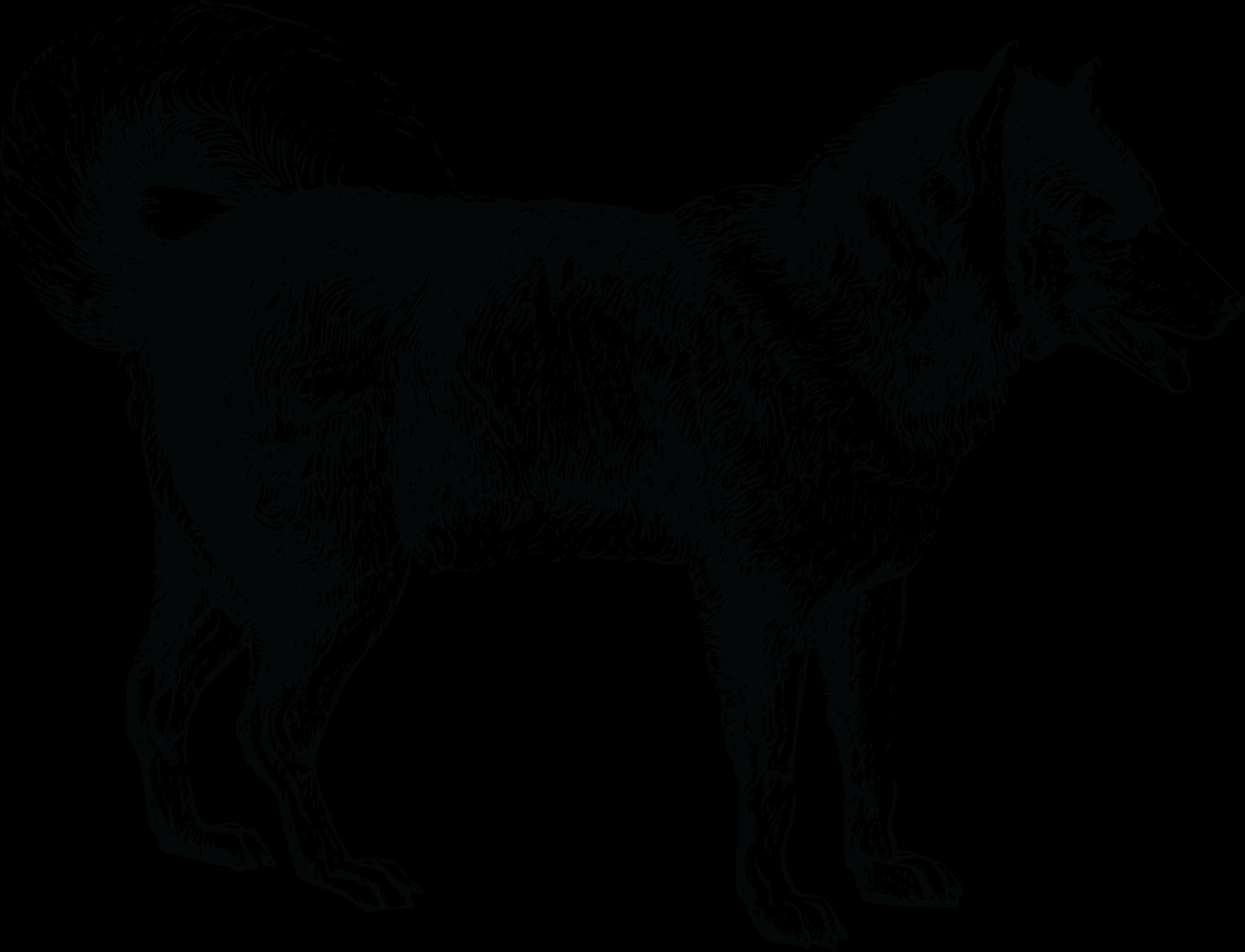 Dog PNG Jpg - 49591