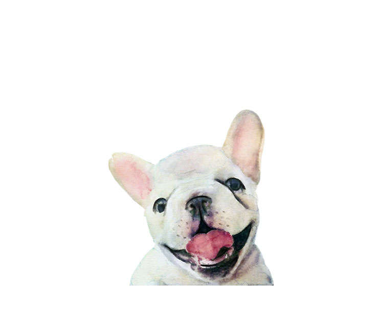 Watercolor French Bulldog Ill
