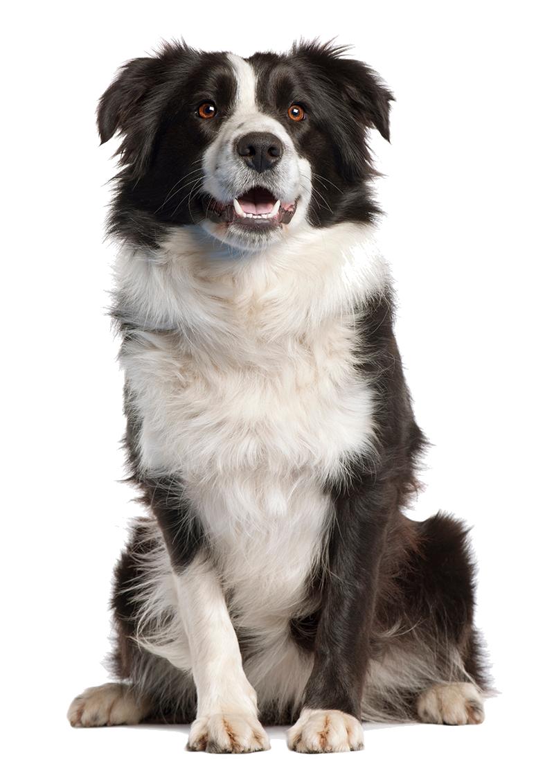 Dog PNG - 8887