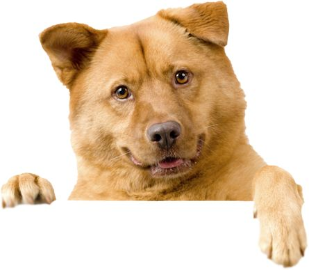 Dog PNG - 21977