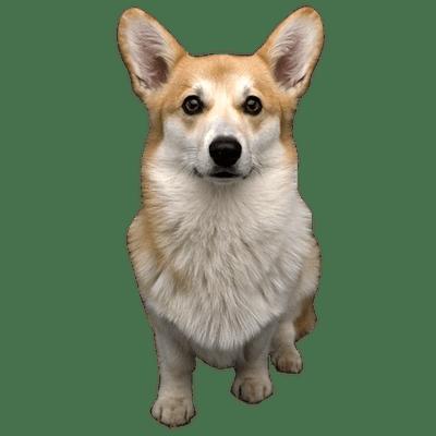 Dog PNG Transparent Background - 146940