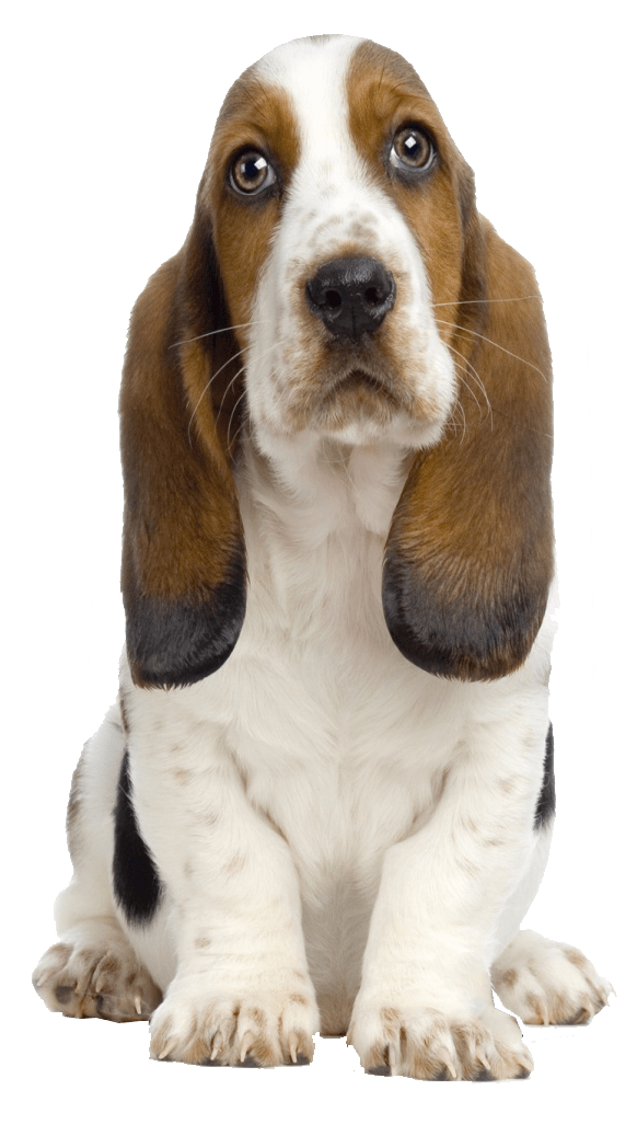Dog PNG Transparent Background
