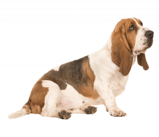Dog PNG Transparent Background - 146939