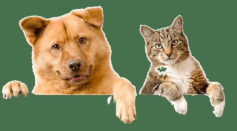 Dog PNG Transparent Background - 146941