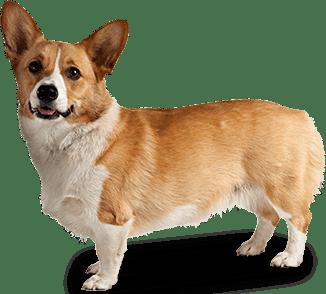 Dog PNG Transparent Background - 146936