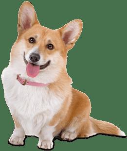 Dog PNG Transparent Background - 146934